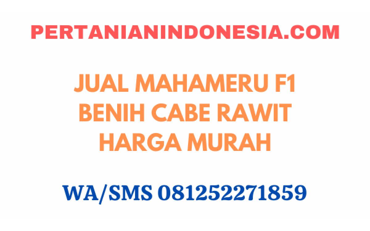 Jual Mahameru F1 Benih Cabe Rawit Harga Murah