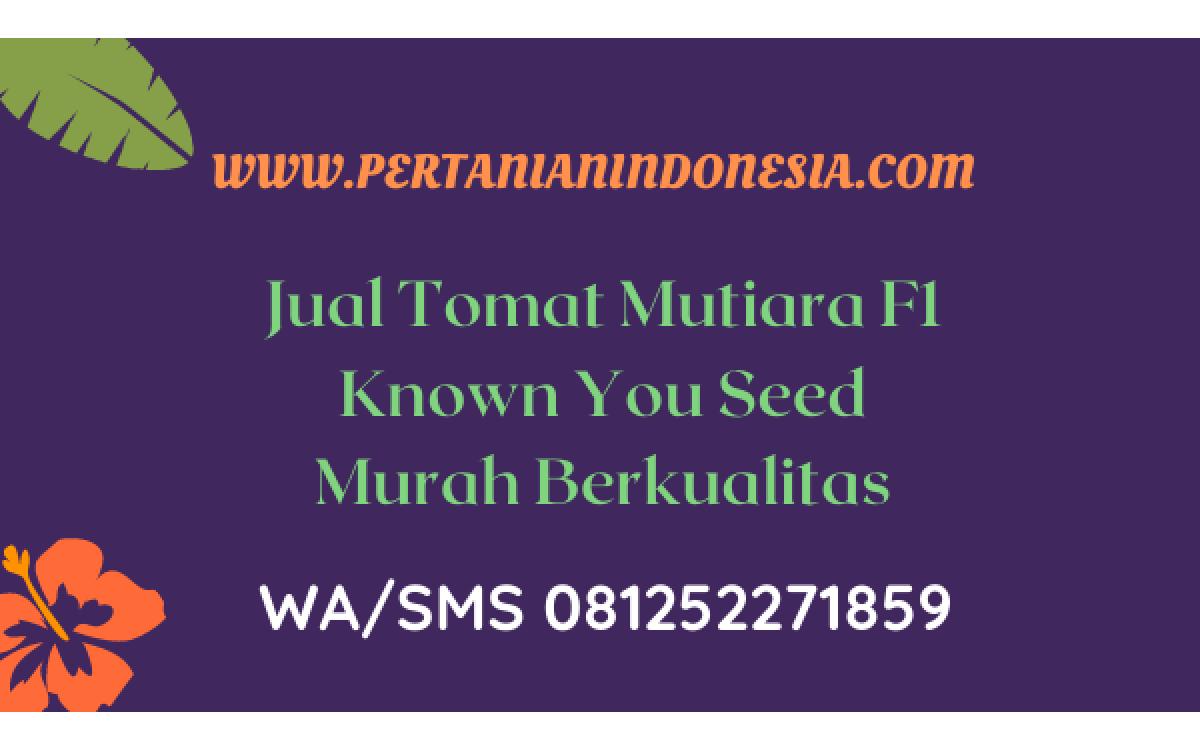 Jual Tomat Mutiara F1 Known You Seed Berkualitas Harga Murah