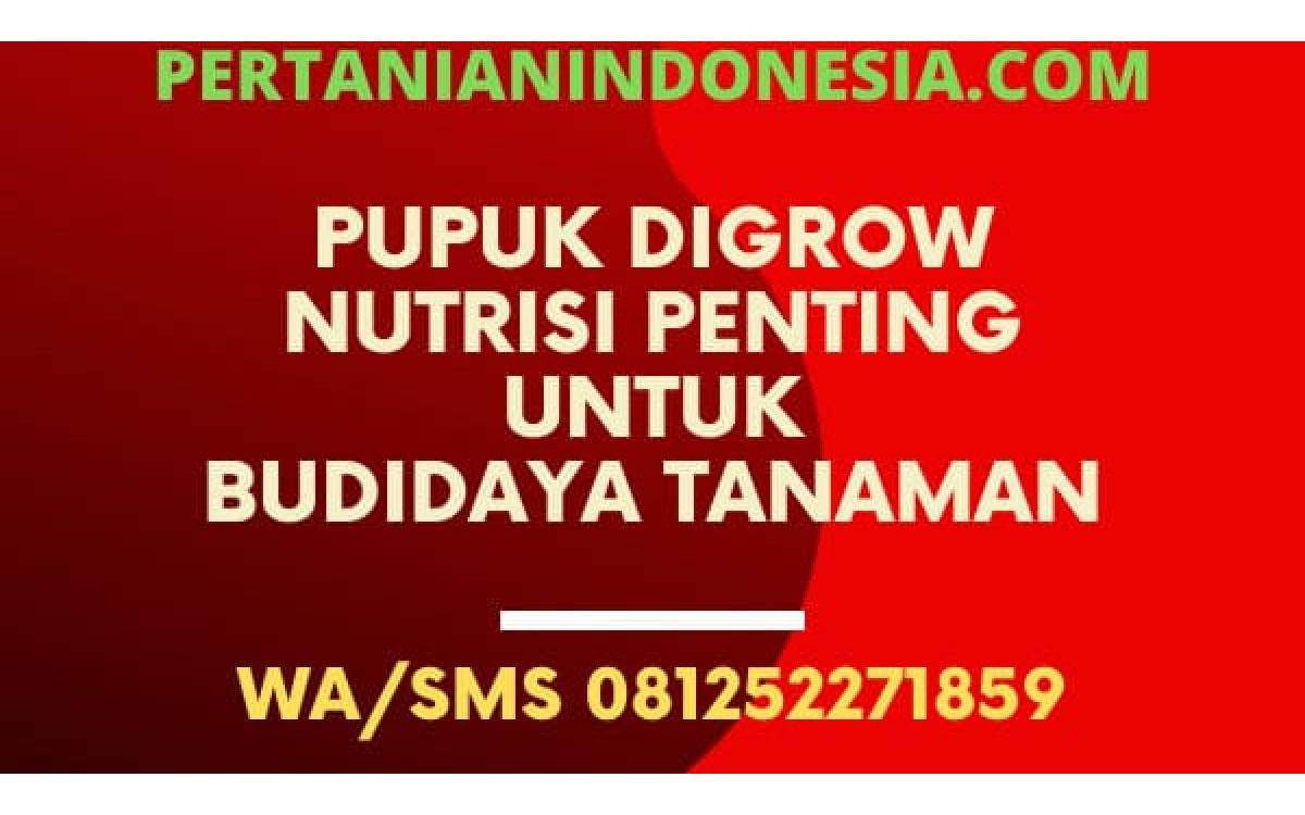 Pupuk Digrow Nutrisi Penting Untuk Budidaya Tanaman