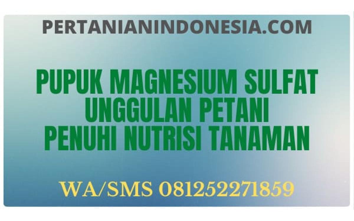 Pupuk Magnesium Sulfat Unggulan Petani Penuhi Nutrisi Tanaman