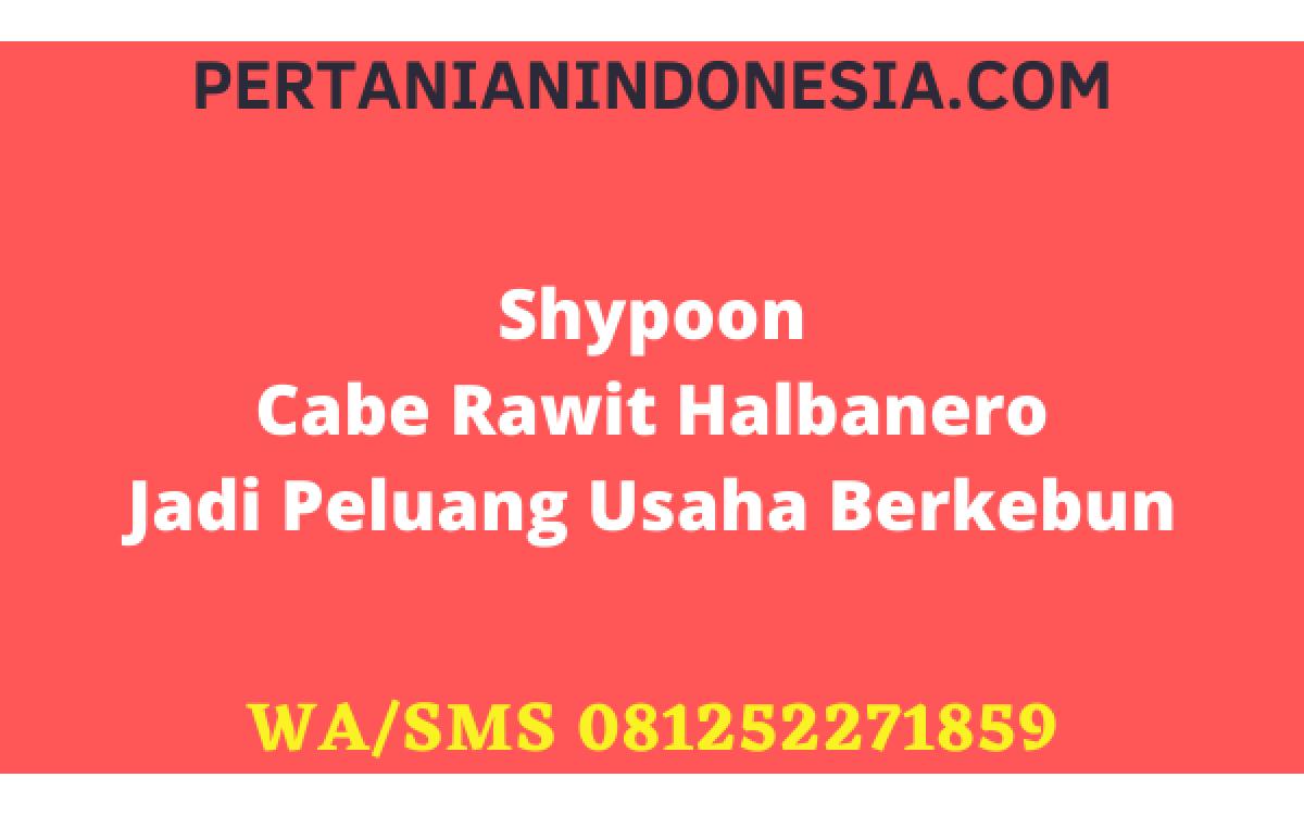 Shypoon Cabe Rawit Halbanero Jadi Peluang Usaha Berkebun