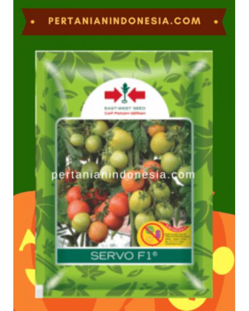 Benih Tomat Servo