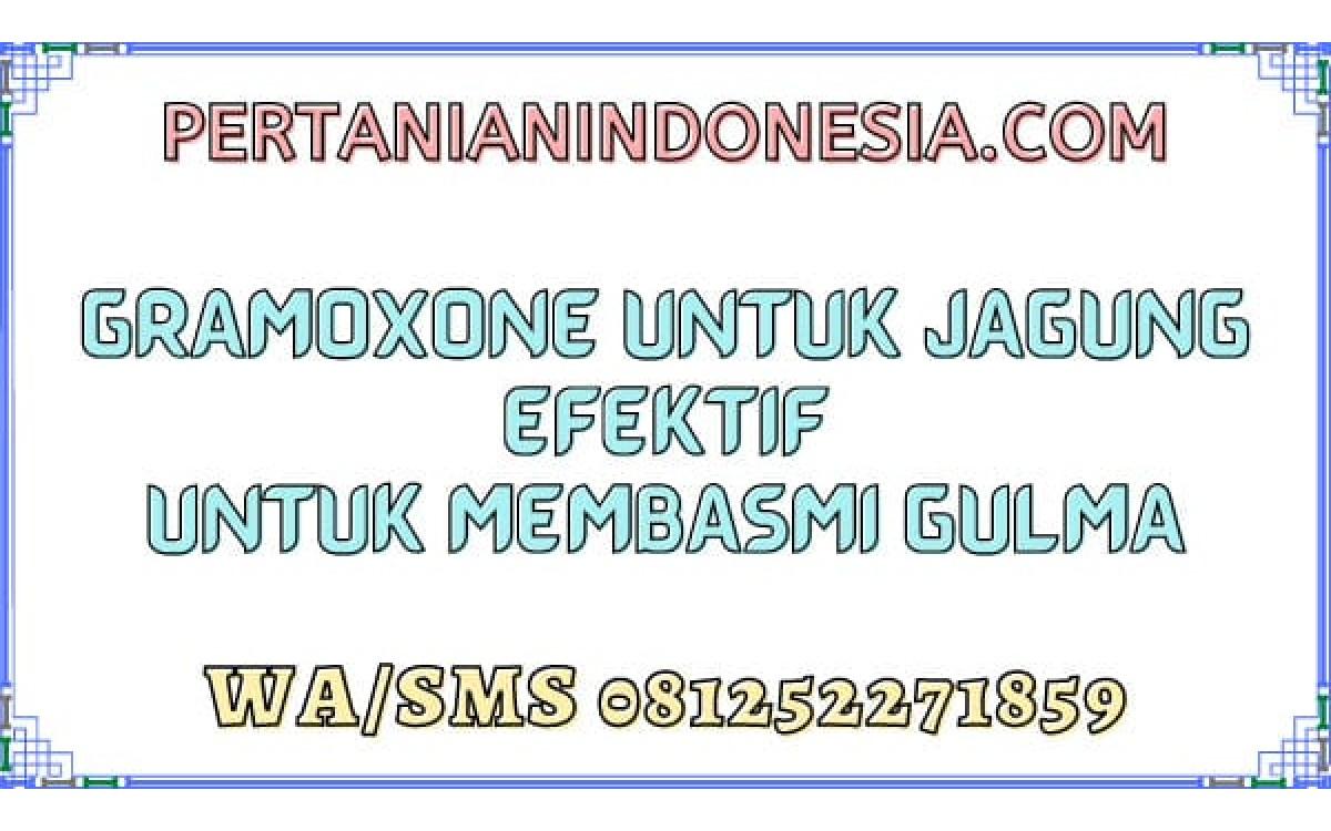 Gramoxone Untuk Jagung Efektif Untuk Membasmi Gulma