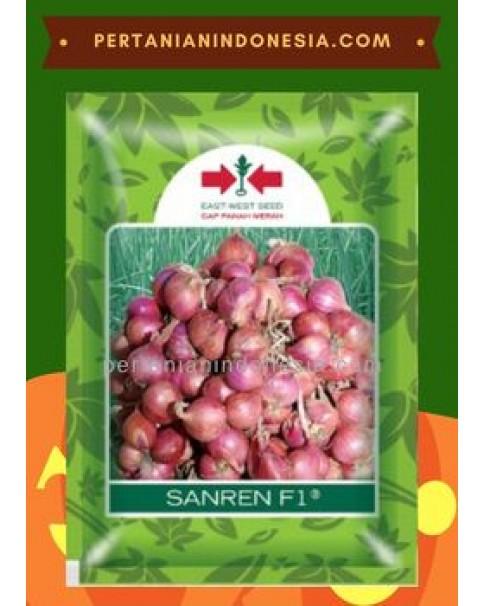 Benih Bawang Merah Sanren